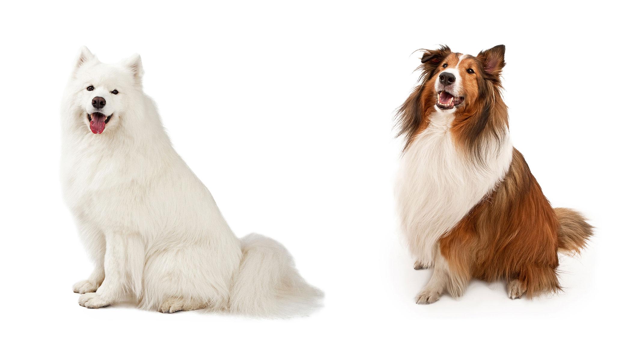 tolettatura-roseto-lavaggio-cani-2