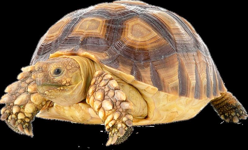 veterinario-rettili-anfibi-mordenti-settimio-roseto